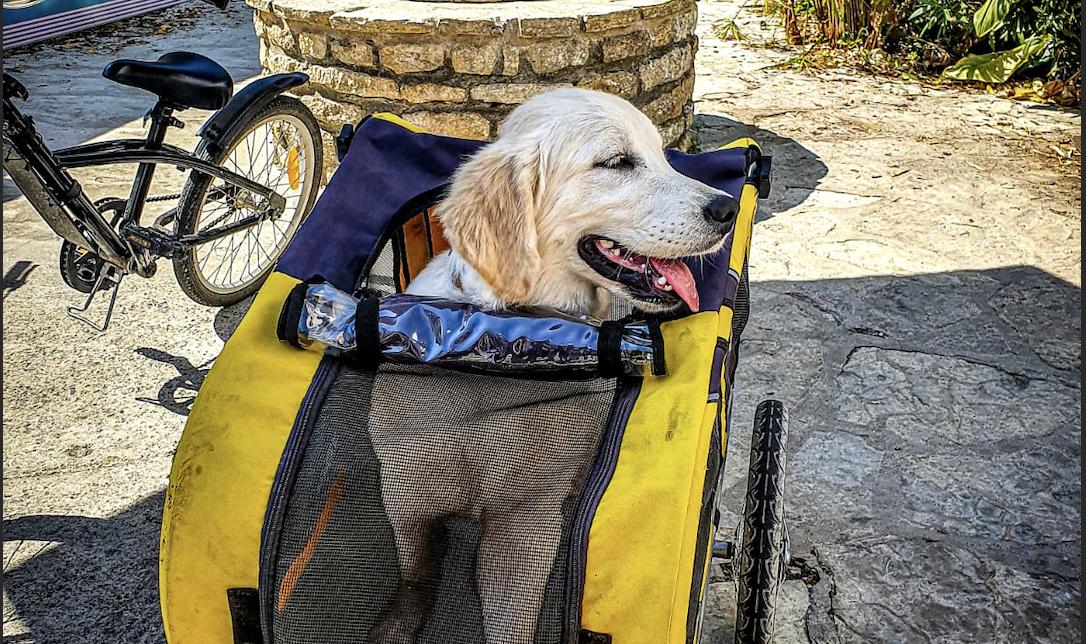 Remorque chien Ile de Ré - Vélo