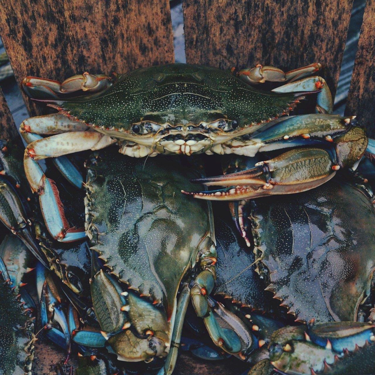 crabes pêche à pied Ile De Ré
