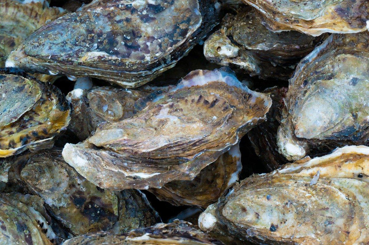 huitres Rivedoux-Plage plage